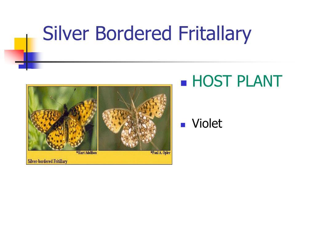 Silver Bordered Fritallary