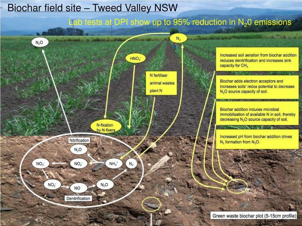 Biochar field site – Tweed Valley NSW