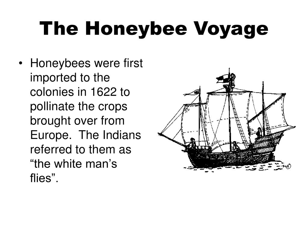 The Honeybee Voyage