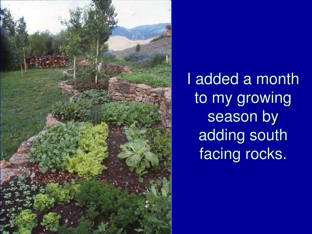 I added a month to my growing season by adding south facing rocks.