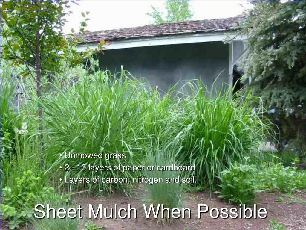 Sheet Mulch When Possible