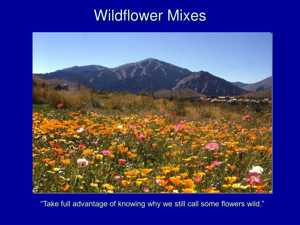 Wildflower Mixes