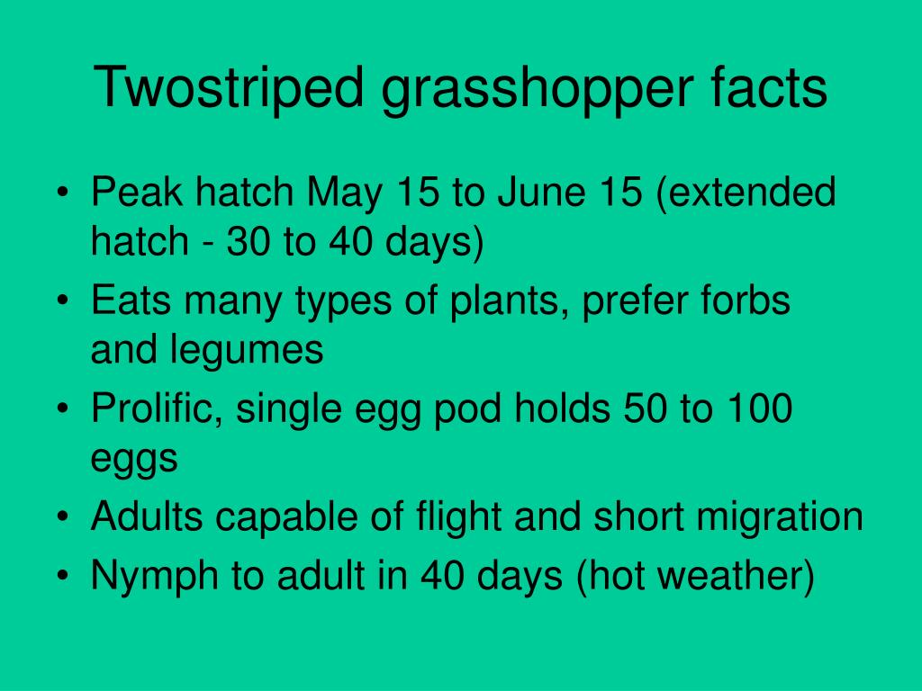 Twostriped grasshopper facts