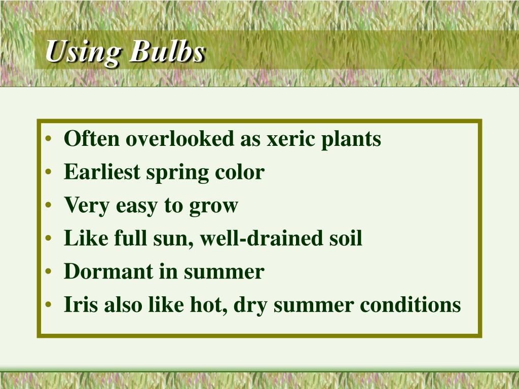 Using Bulbs
