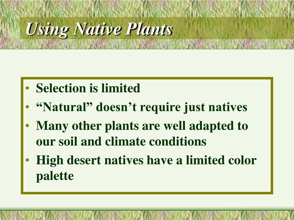 Using Native Plants