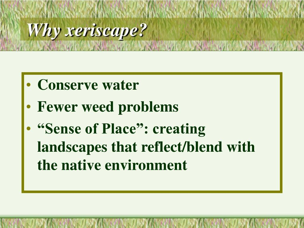 Why xeriscape?
