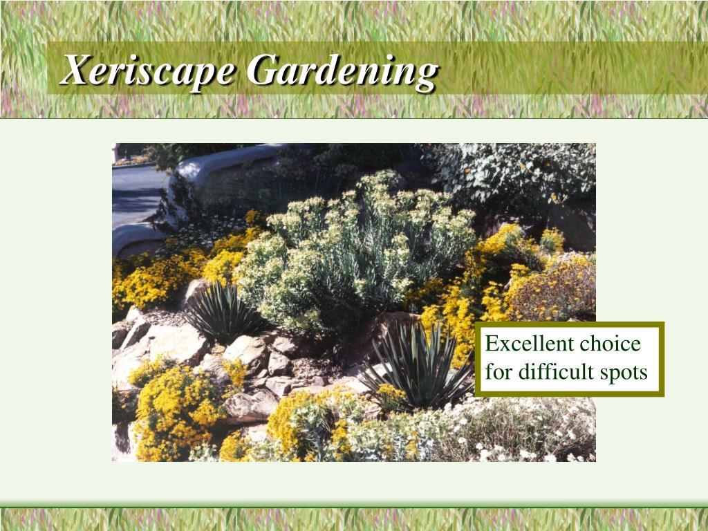 Xeriscape Gardening
