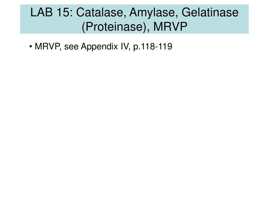 LAB 15: Catalase, Amylase, Gelatinase (Proteinase), MRVP