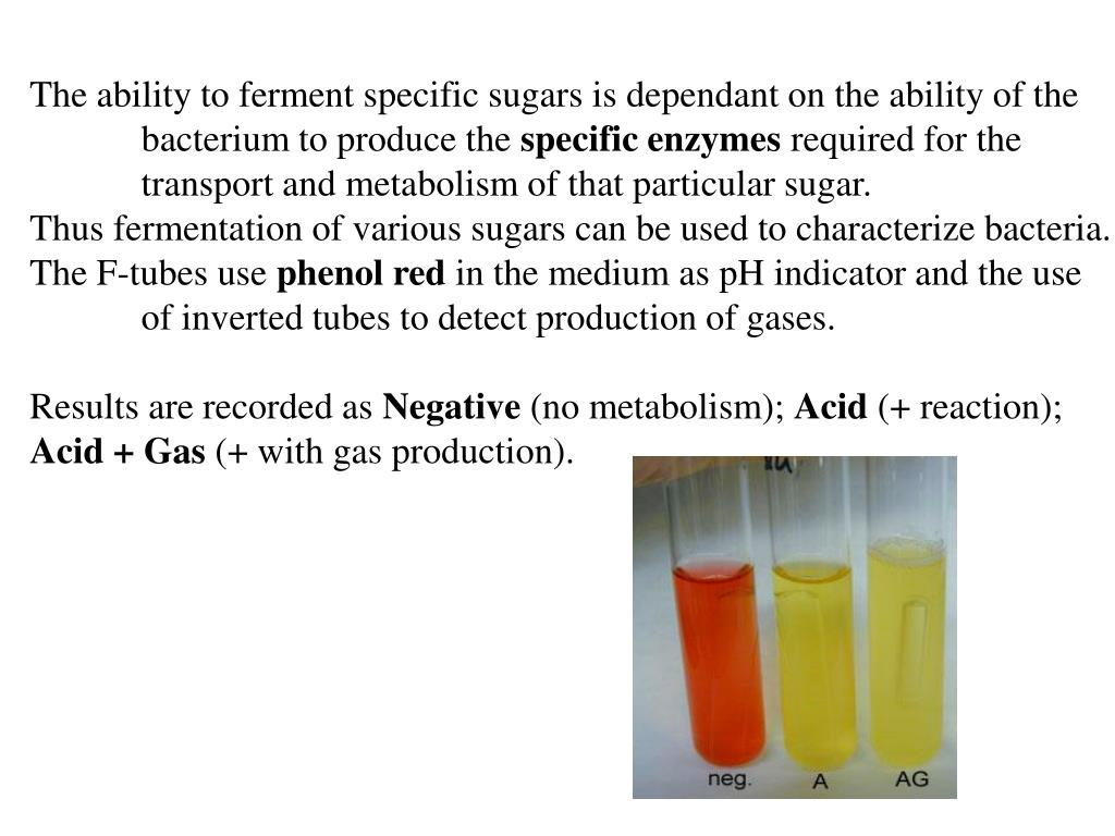 The ability to ferment specific sugars is dependant on the ability of the