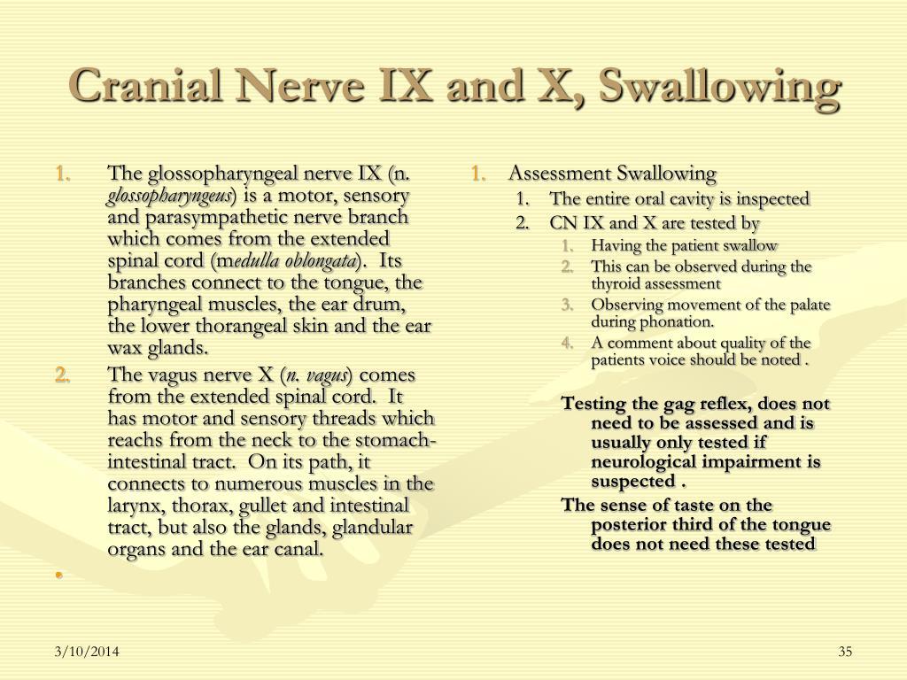 The glossopharyngeal nerve IX (n