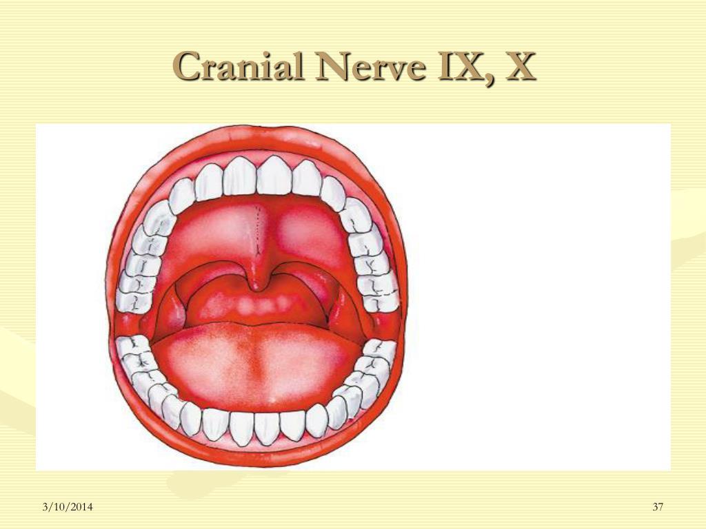 Cranial Nerve IX, X