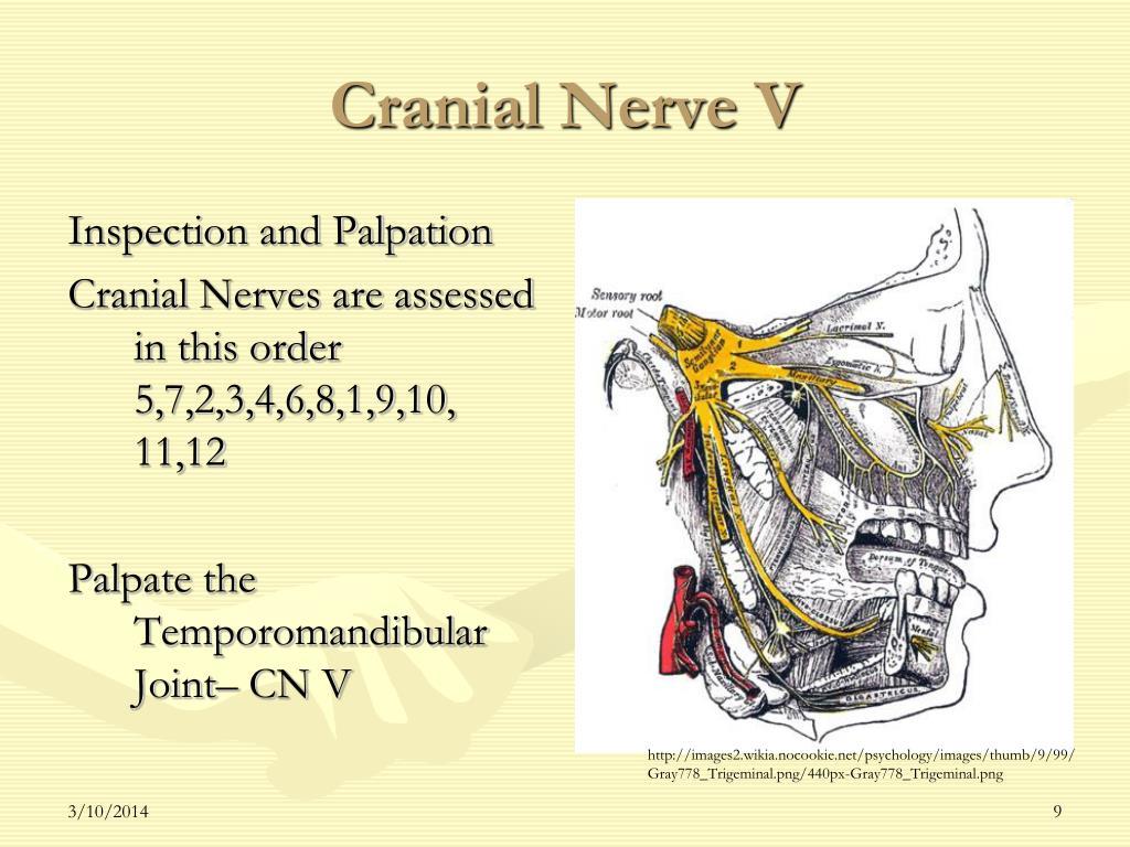 Cranial Nerve V