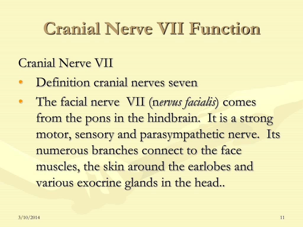 Cranial Nerve VII Function