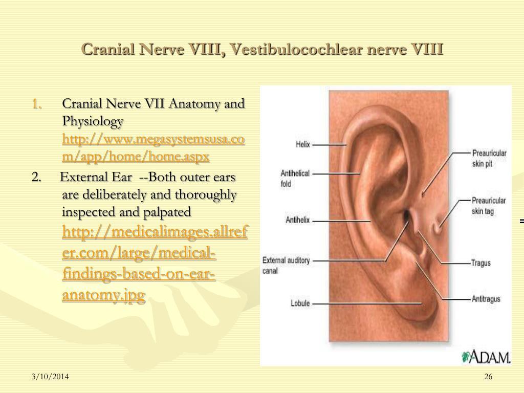 Cranial Nerve VIII,