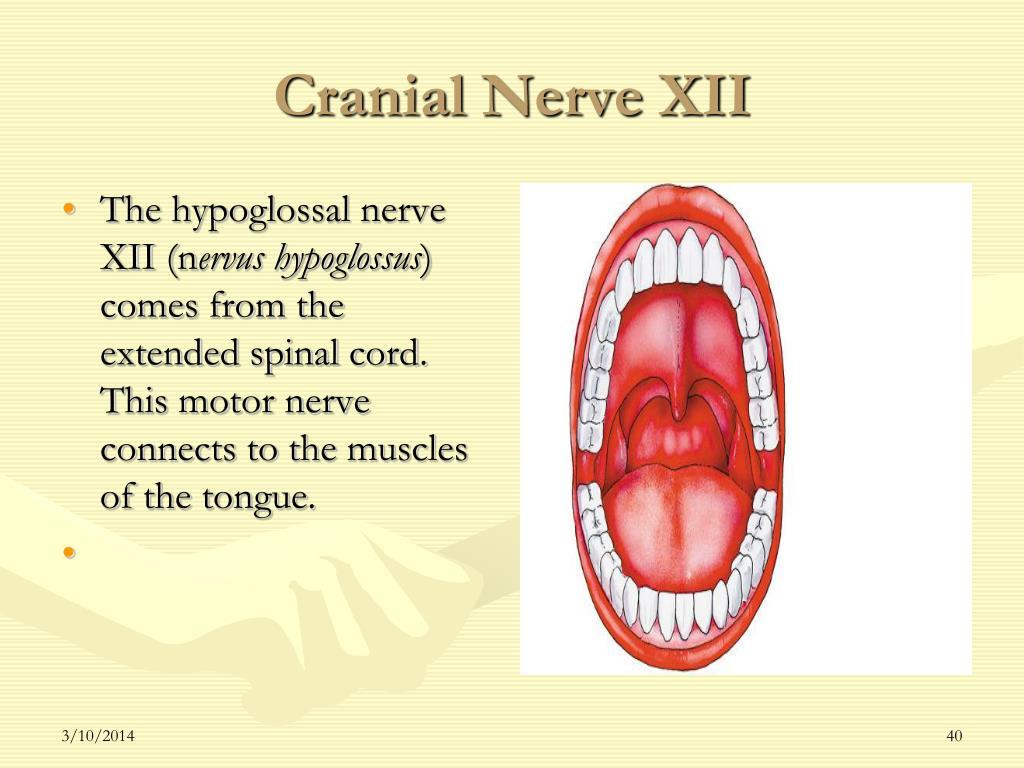 Cranial Nerve XII