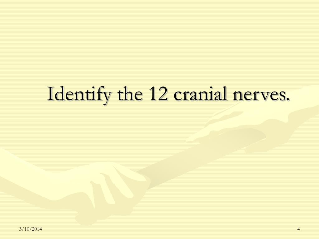 Identify the 12 cranial nerves.