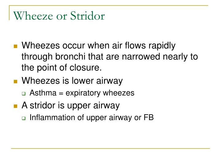 Wheeze or Stridor
