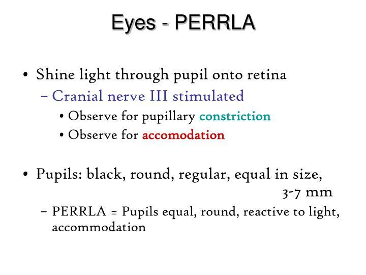 Eyes - PERRLA
