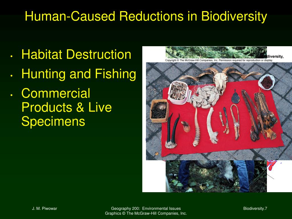 Human-Caused Reductions in Biodiversity