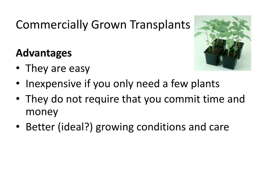 Commercially Grown Transplants