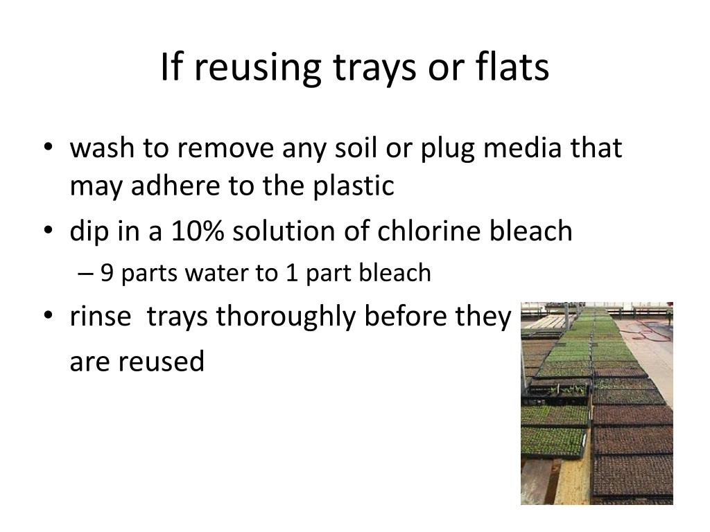 If reusing trays or flats