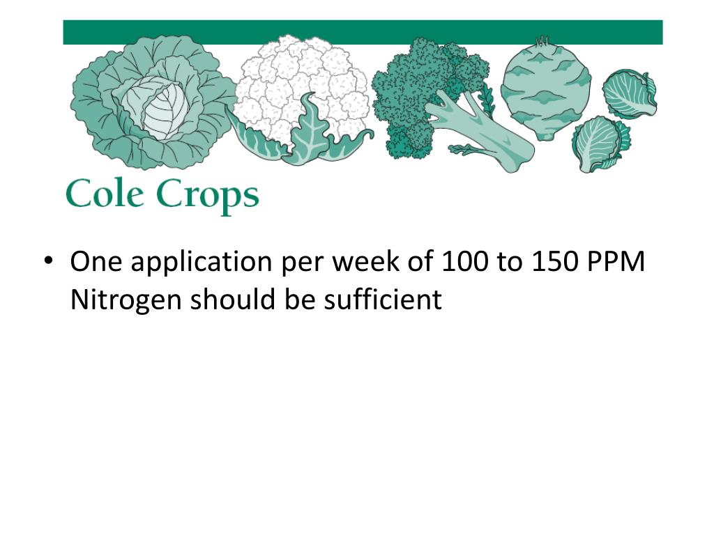 One application per week of 100 to 150 PPM Nitrogen should be sufficient