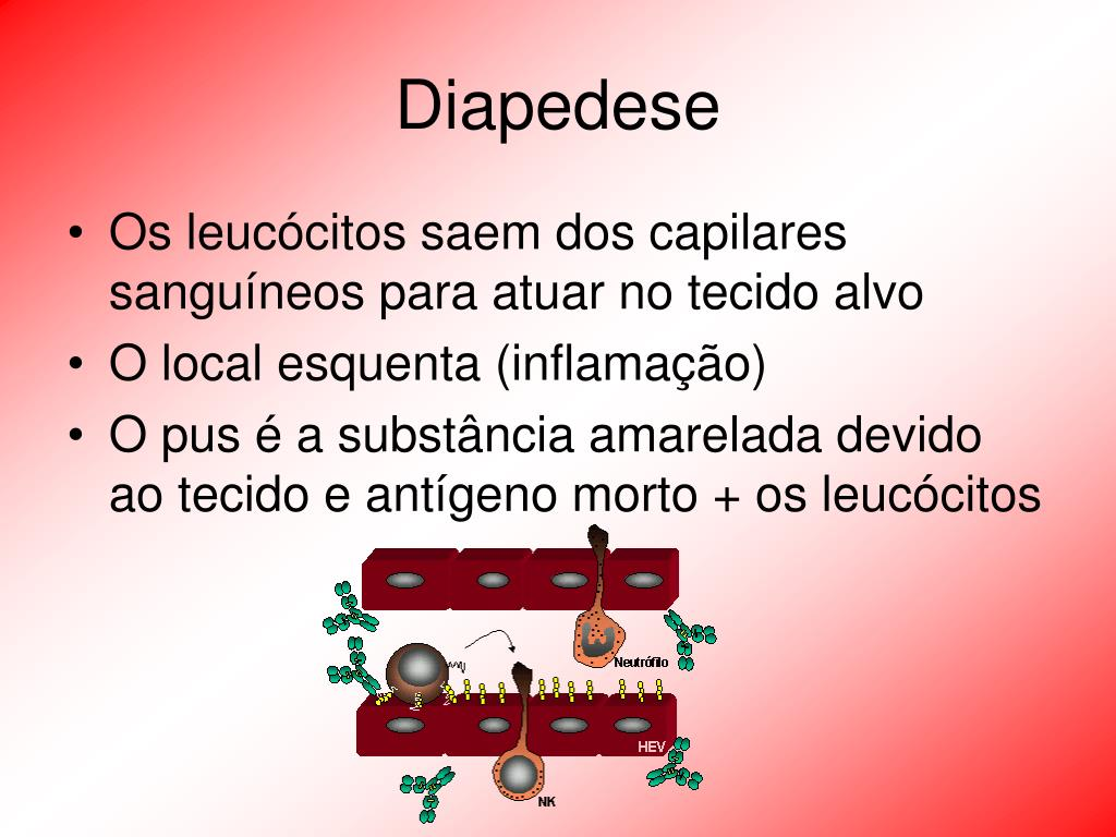 Diapedese