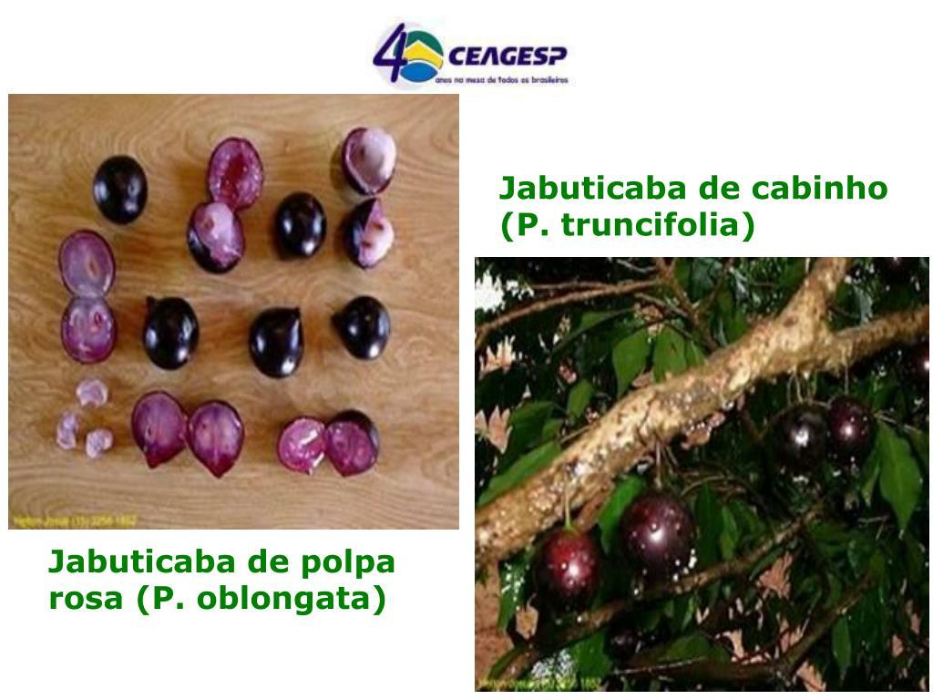 Jabuticaba de cabinho (P. truncifolia)