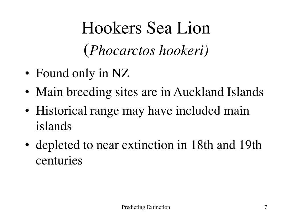 Hookers Sea Lion