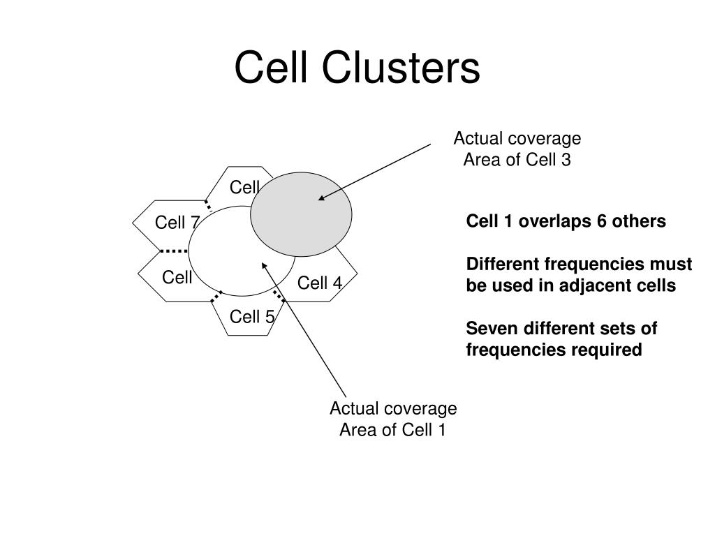 Cell Clusters