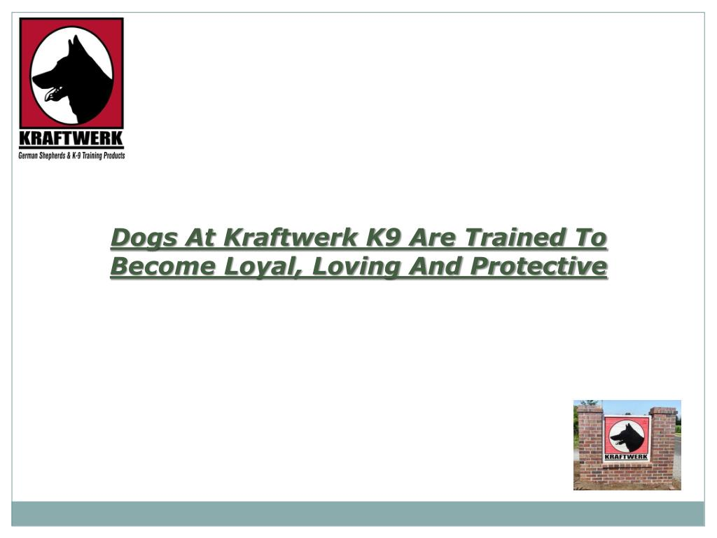 Dogs At Kraftwerk K9 Are Trained To Become Loyal, Loving And Protective
