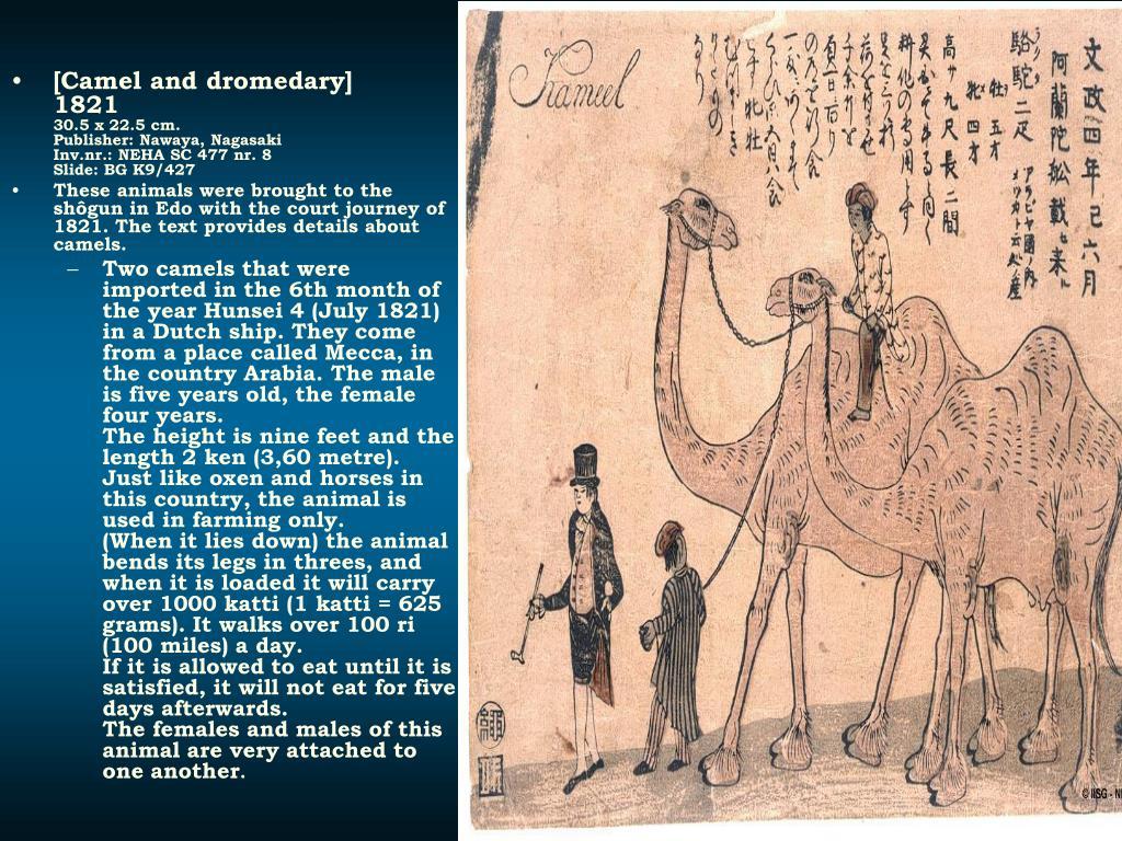 [Camel and dromedary]