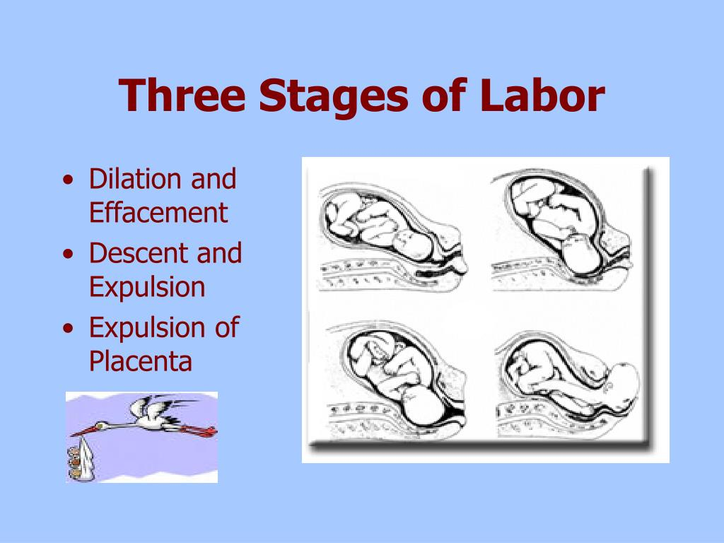 Three Stages of Labor