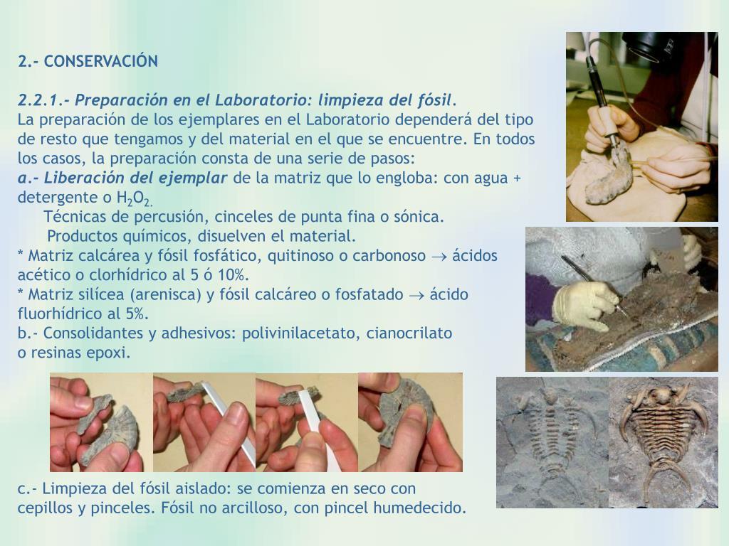 2.- CONSERVACIÓN