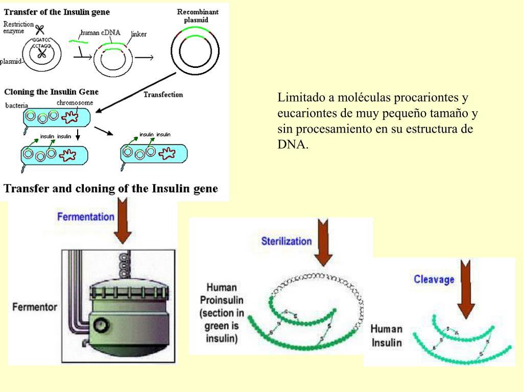 Limitado a moléculas procariontes y eucariontes de muy pequeño tamaño y sin procesamiento en su estructura de DNA.