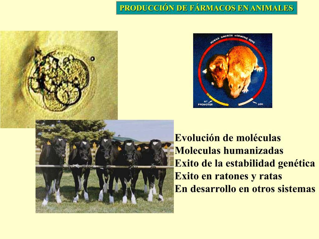 PRODUCCIÓN DE FÁRMACOS EN ANIMALES
