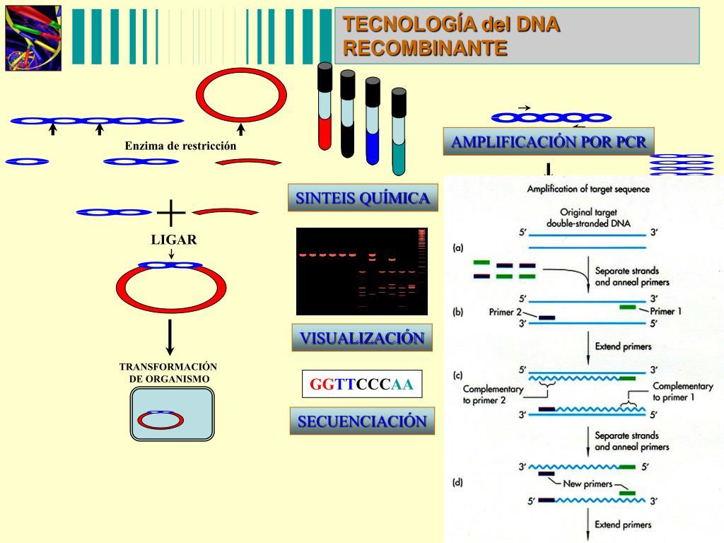 TECNOLOGÍA del DNA RECOMBINANTE