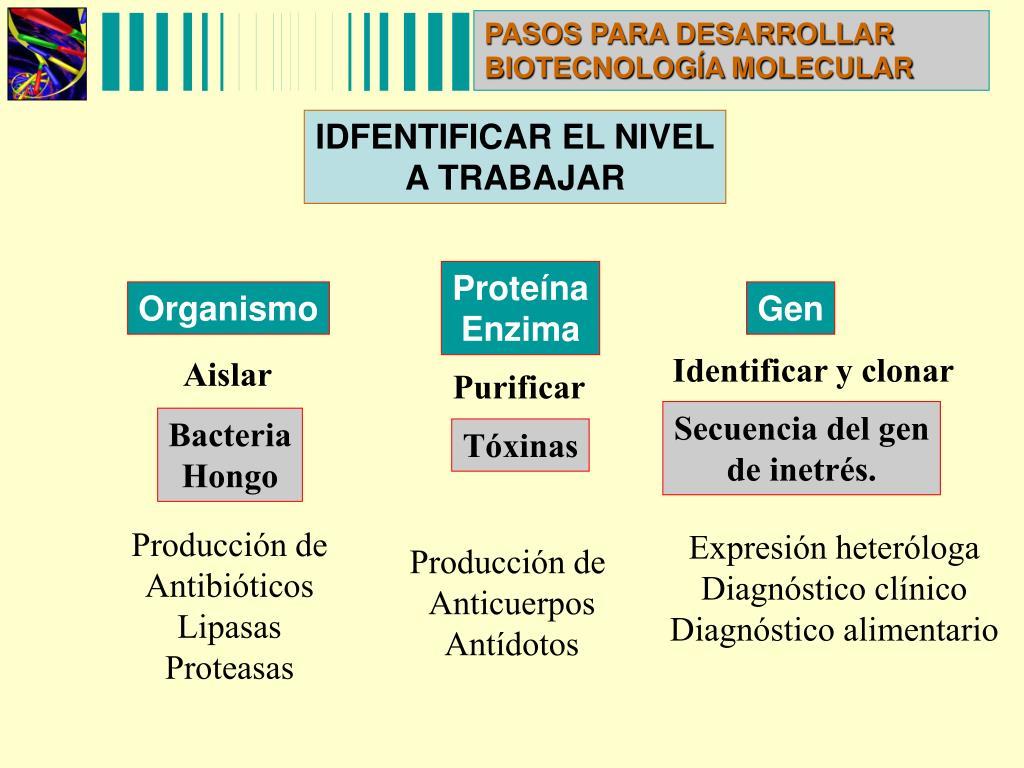 PASOS PARA DESARROLLAR BIOTECNOLOGÍA MOLECULAR