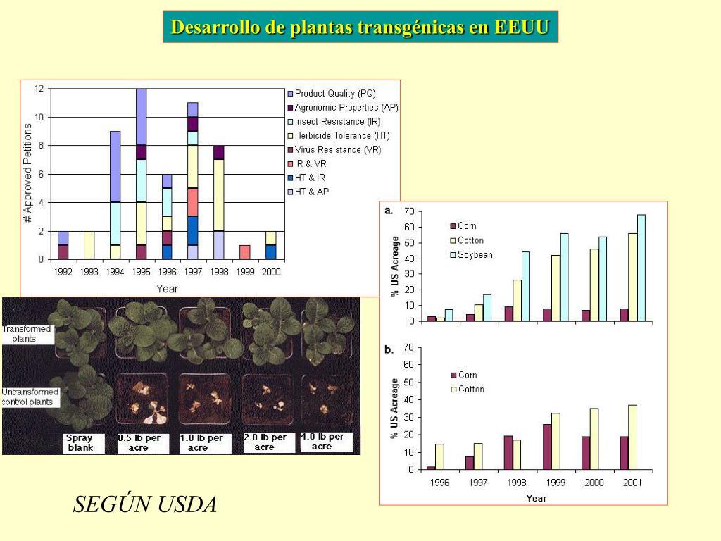 Desarrollo de plantas transgénicas en EEUU