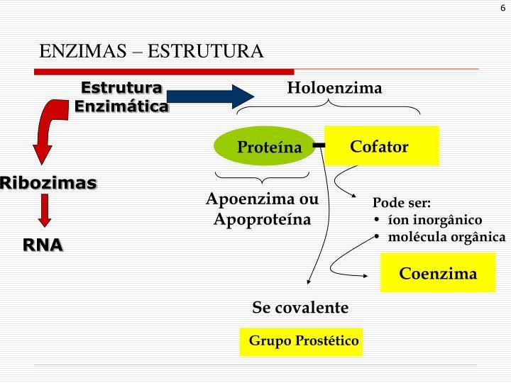 Holoenzima