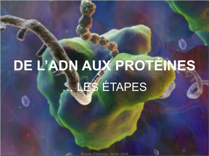 DE L'ADN AUX PROTÉINES