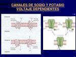 canales de sodio y potasio voltaje dependientes