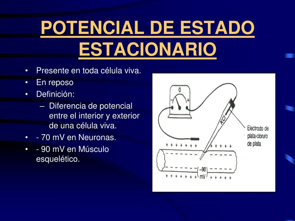 POTENCIAL DE ESTADO ESTACIONARIO