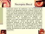 necropsia bucal