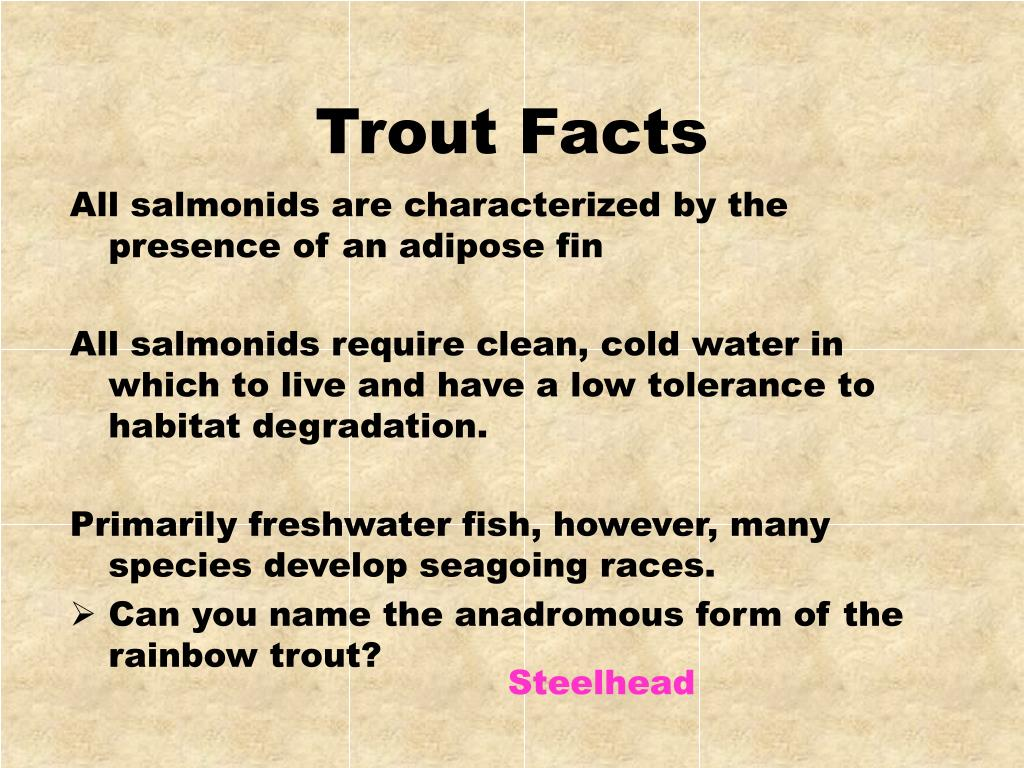 Trout Facts