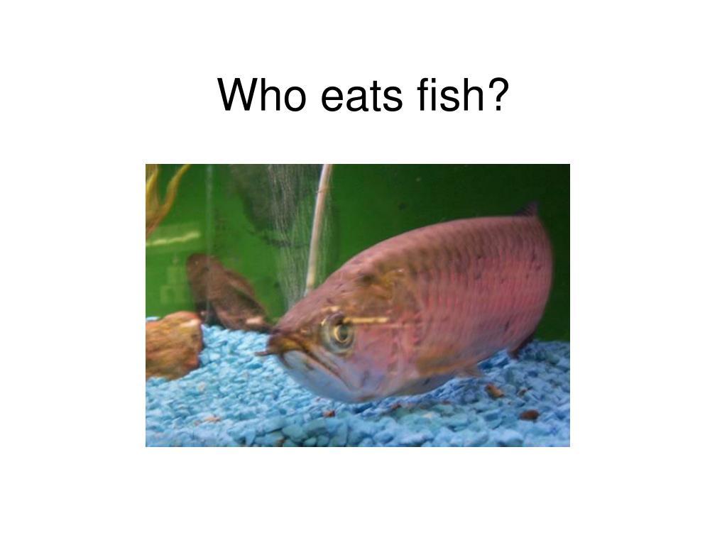 Who eats fish?