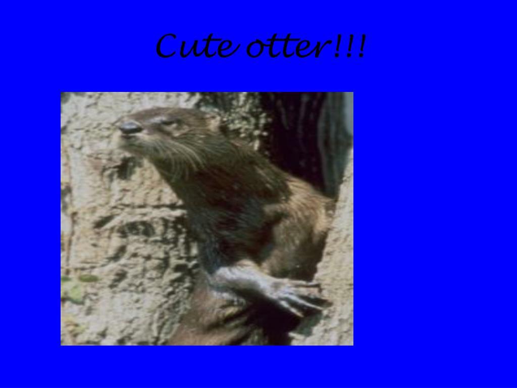 Cute otter!!!