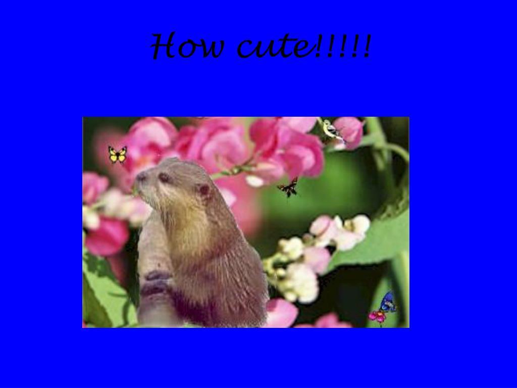 How cute!!!!!