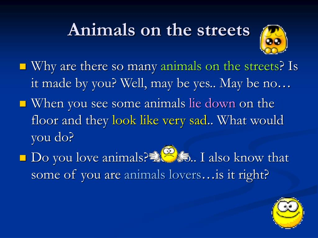 Animals on the streets