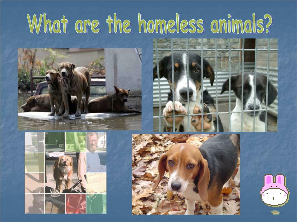 What are the homeless animals?
